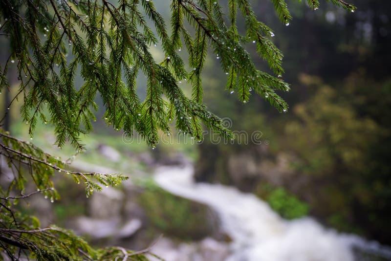 Natur Carpathians i regnet Nära vattenfallet Kamyanka royaltyfria foton