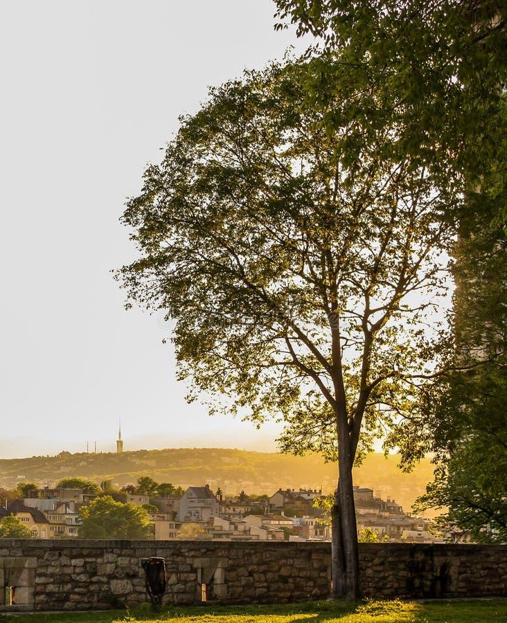 Natur in der Stadt lizenzfreies stockfoto