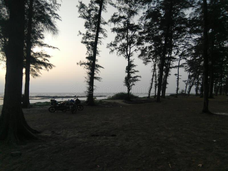 Natur durch Strandseite lizenzfreies stockbild