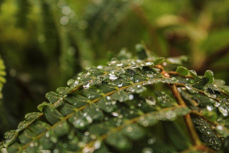 Natur En droppe av vatten på ett ark royaltyfria foton