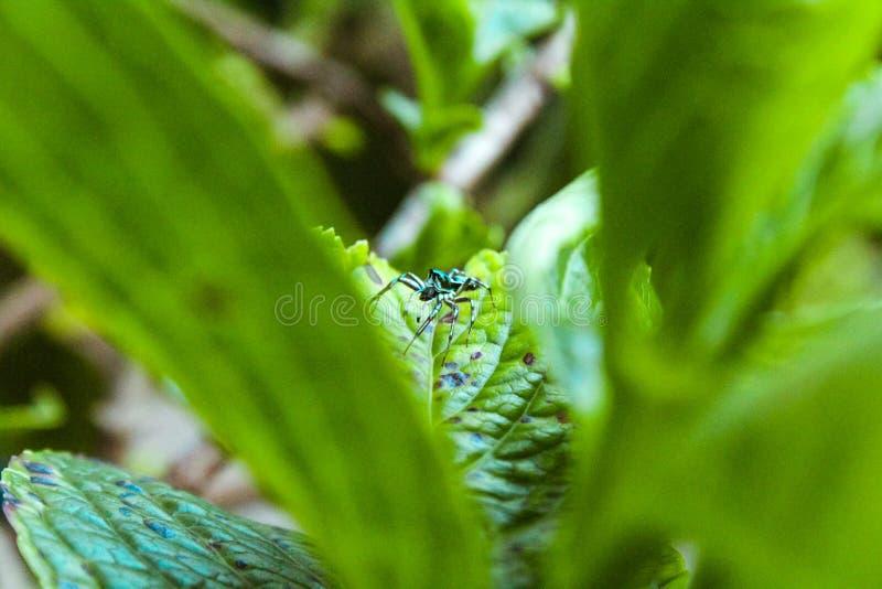 Natur - en spindel och sidor royaltyfria bilder