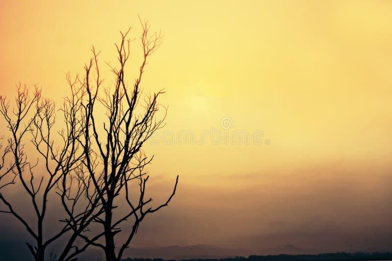 Natur för fokussuddighetsträd fotografering för bildbyråer