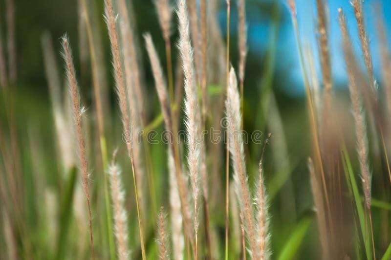 natur för gräs för höstbakgrundsclose upp arkivbilder