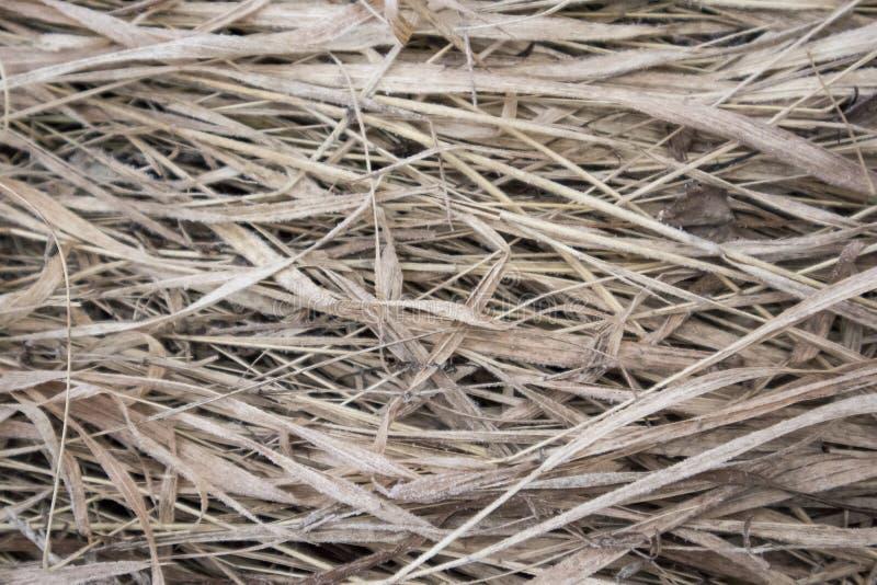 natur för gräs för höstbakgrundsclose upp arkivbild