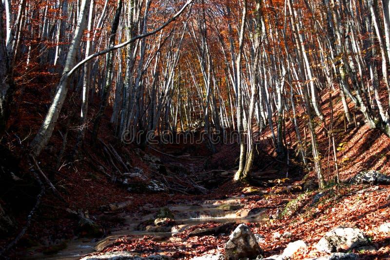 Natur för höst för härlig höstskog härlig Landskap i röda och gula färger arkivfoto