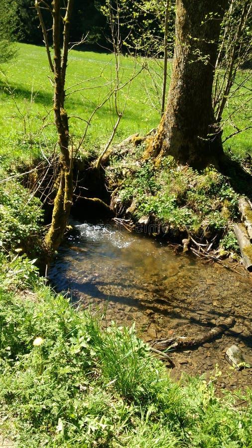 natur för natur för gräsplan för sonne för sol för vatten för wasserlochbachwasser gruen arkivfoton