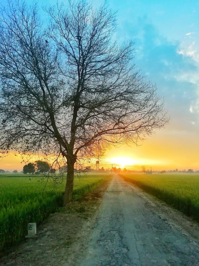 Natur för sollöneförhöjningmorgon royaltyfri bild