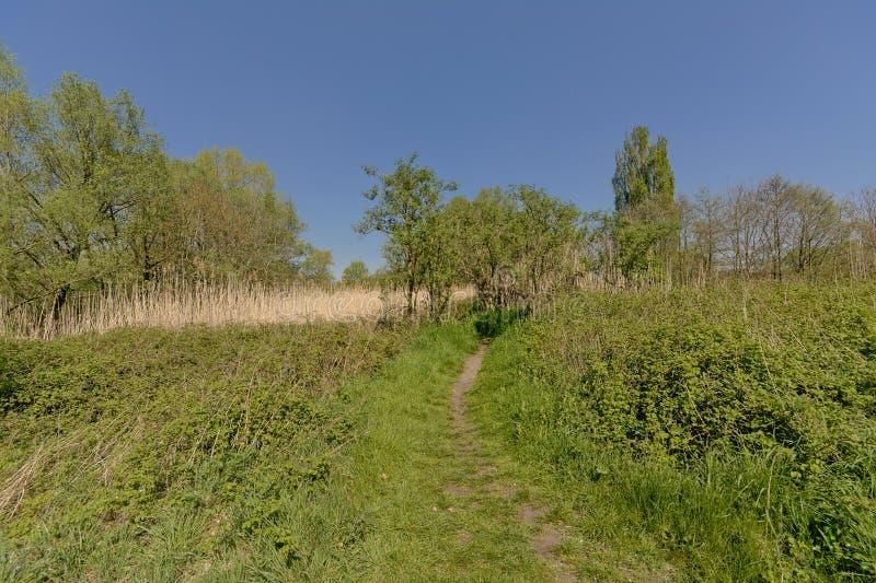 Natur f?r thorugh f?r fotvandra slinga flemish i den Bourgoyen naturreserven, Ghent, Belgien arkivfoto