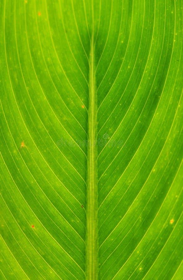 Natur fodrad modell royaltyfri foto
