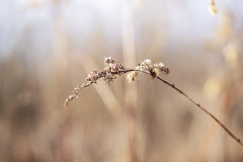 Natur fotografie od Szigetköz w Węgry zdjęcia royalty free