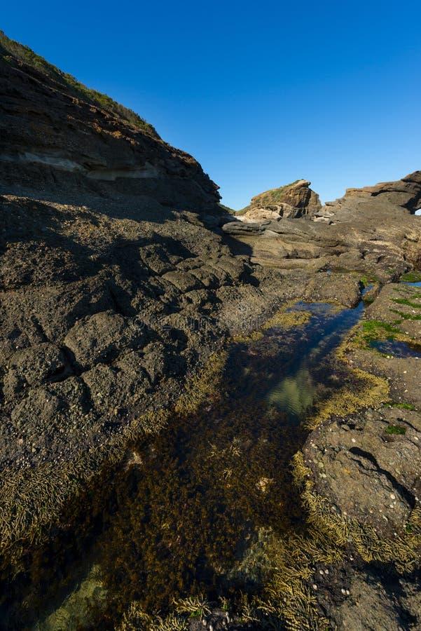 Natur från den härliga stranden i Sydney arkivbild