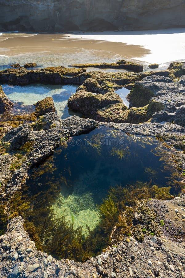 Natur från den härliga stranden i Sydney royaltyfri foto