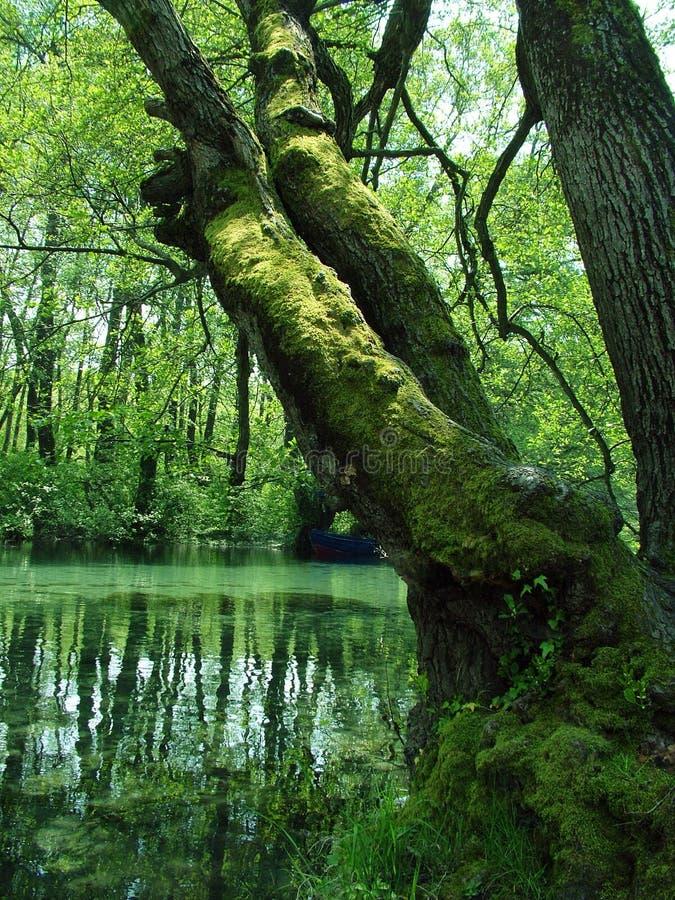 Natur - grüner Sumpf lizenzfreies stockfoto