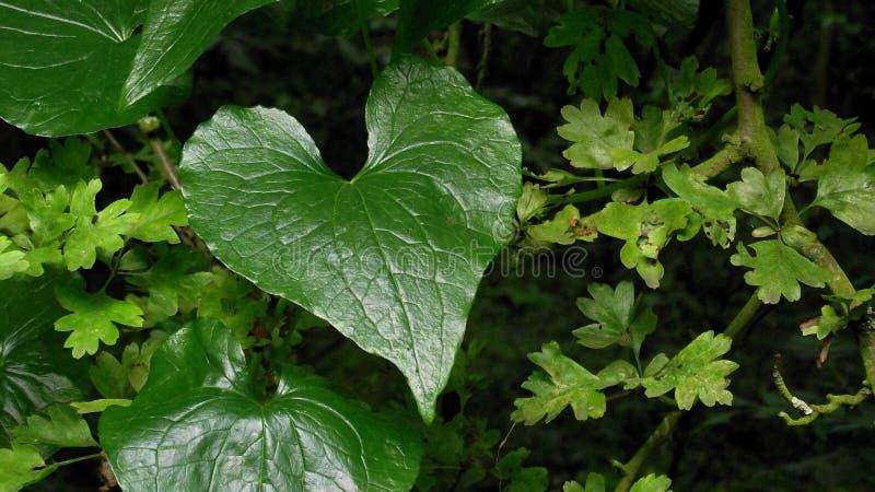 Natur-Herz stockfotografie