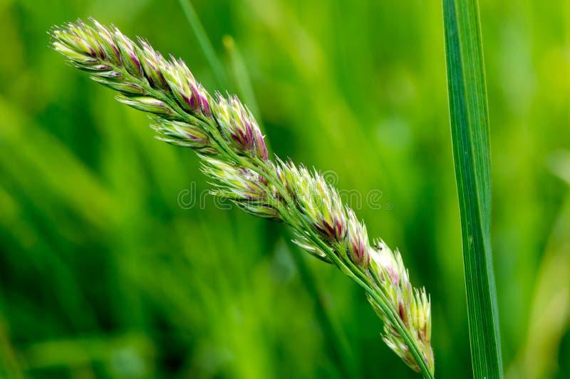 Natur-Hintergrund-Gras lizenzfreie stockfotografie