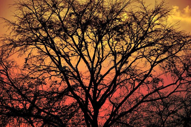 Natur Hintergrund und outdoour stockfotografie