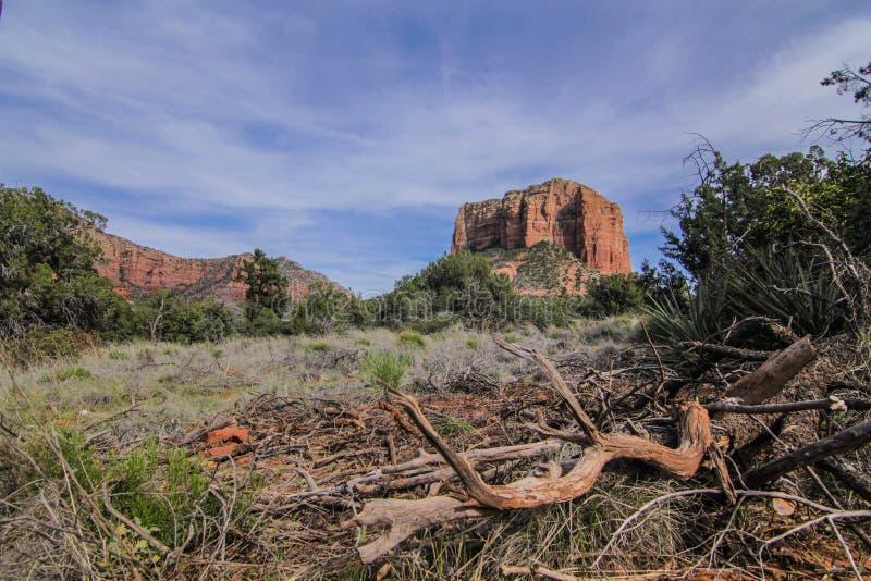 Natur i Arizona royaltyfri foto