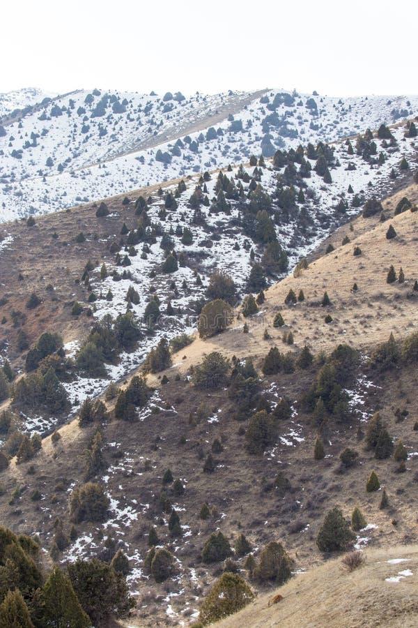 Natur i de Tien Shan bergen i vinter kazakhstan fotografering för bildbyråer