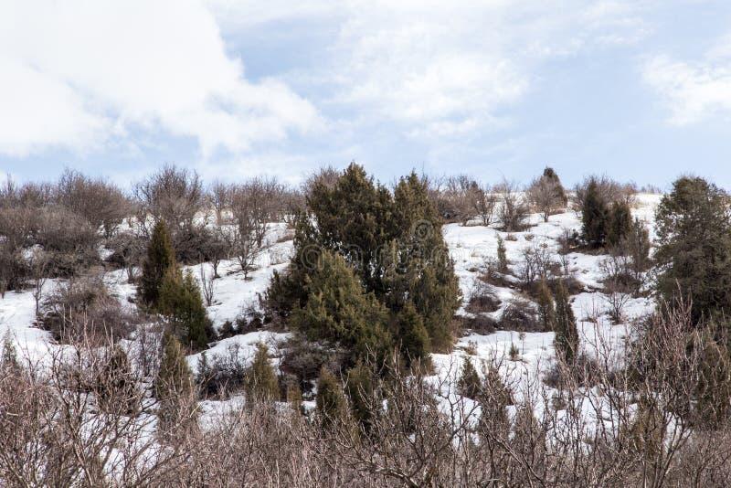 Natur i de Tien Shan bergen i vinter kazakhstan arkivfoton