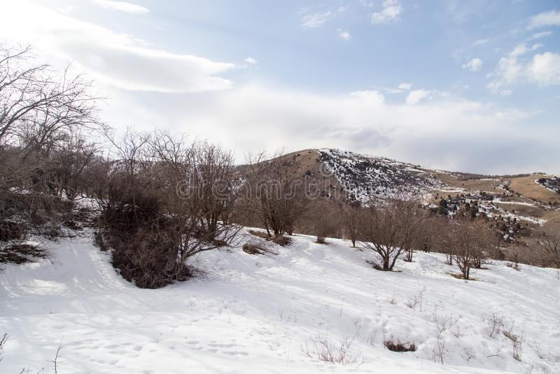Natur i de Tien Shan bergen i vinter kazakhstan royaltyfri bild
