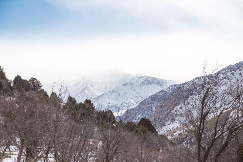 Natur i de Tien Shan bergen i vinter kazakhstan arkivbild
