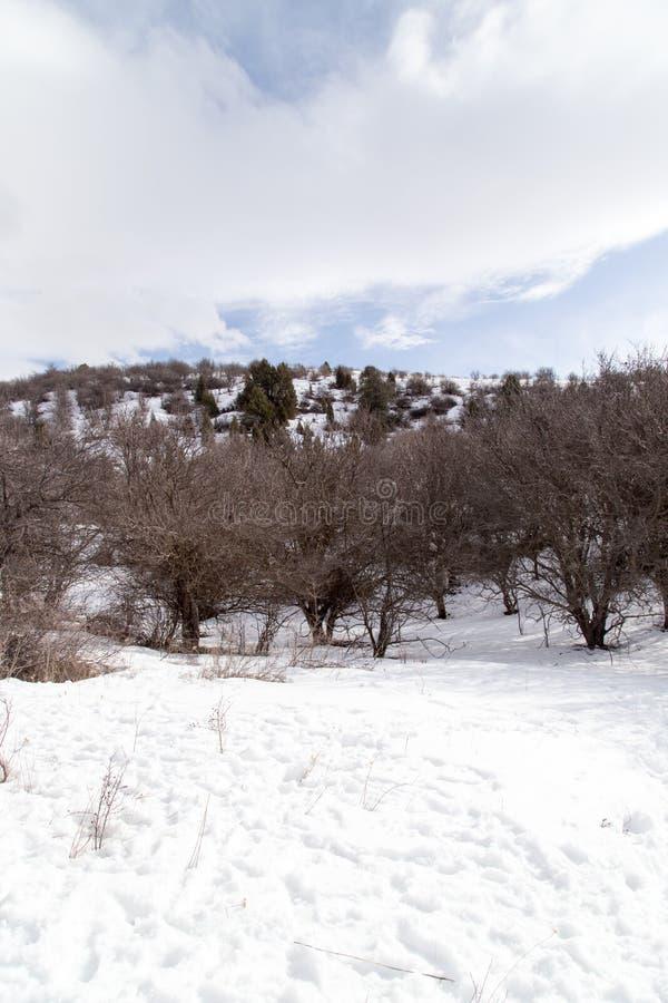 Natur i de Tien Shan bergen i vinter kazakhstan arkivbilder