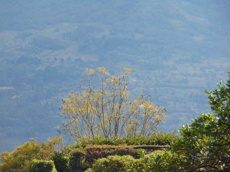 Natur i framdel av en agua Volcano Antigua Guatemala arkivfoto