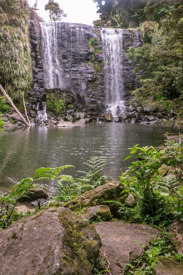 Natur i Kerikeri, Nya Zeeland: mossigt vaggar och ormbunkar på Wairoa royaltyfri foto