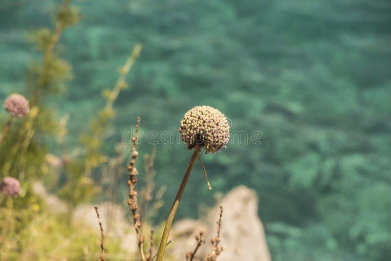 Natur i Montenegro arkivfoto
