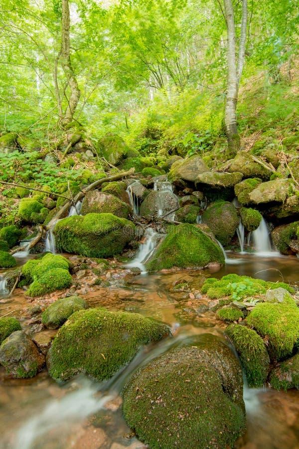Natur i Serbien Stara Planina royaltyfri fotografi