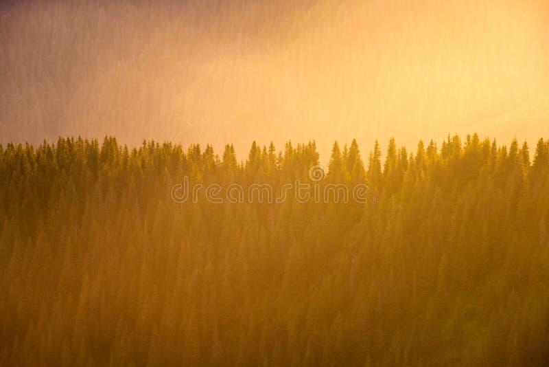 Natur im Detail, Minimalismus und Raum, Linien und Einfachheit lizenzfreie stockfotos