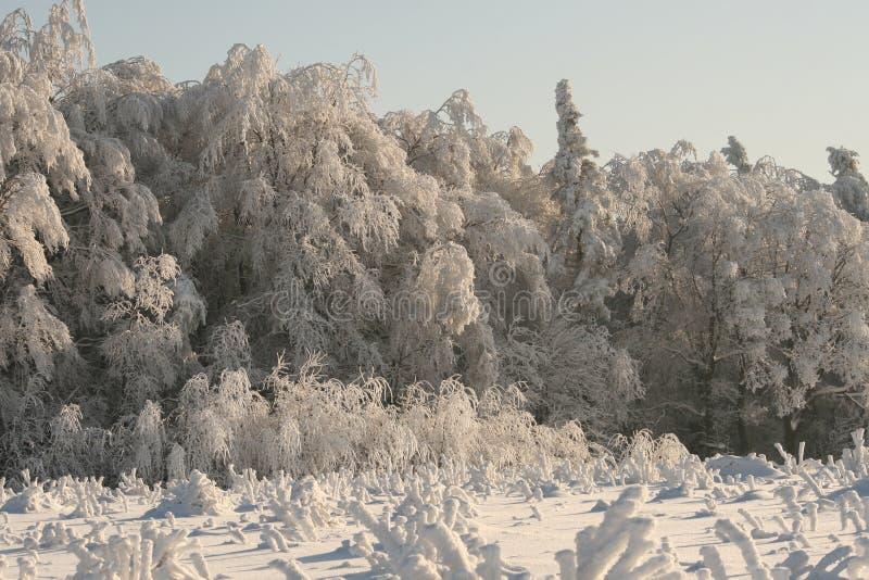 Natur im weißen Winter stockfotos