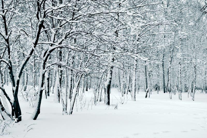Natur im Winter stockfotos