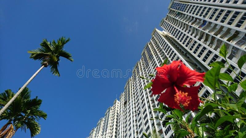 Natur ist ein städtisches Konzept des Muss, Blumen, ein Baum und ein nettes viee stockfotos