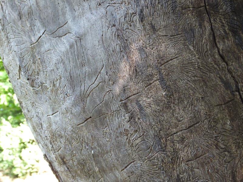 Natur-Kunst oder Käfer Woodcarving lizenzfreies stockfoto