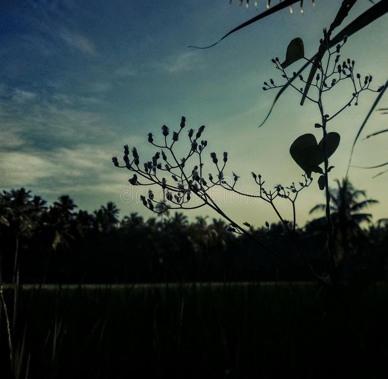 Natur-Liebe stockfotografie