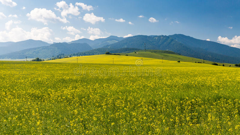 Natur in Liptov-Region, Slowakei in Sommer 2015 stockfotografie