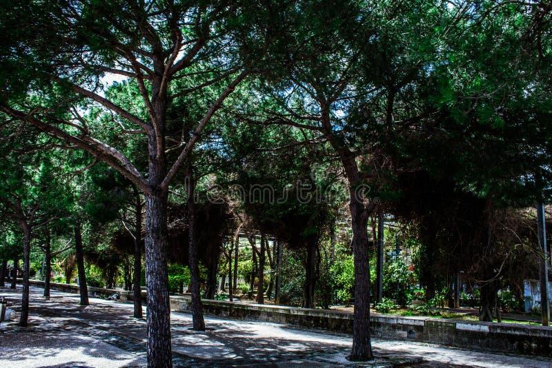 Natur Lissabon stockfotos