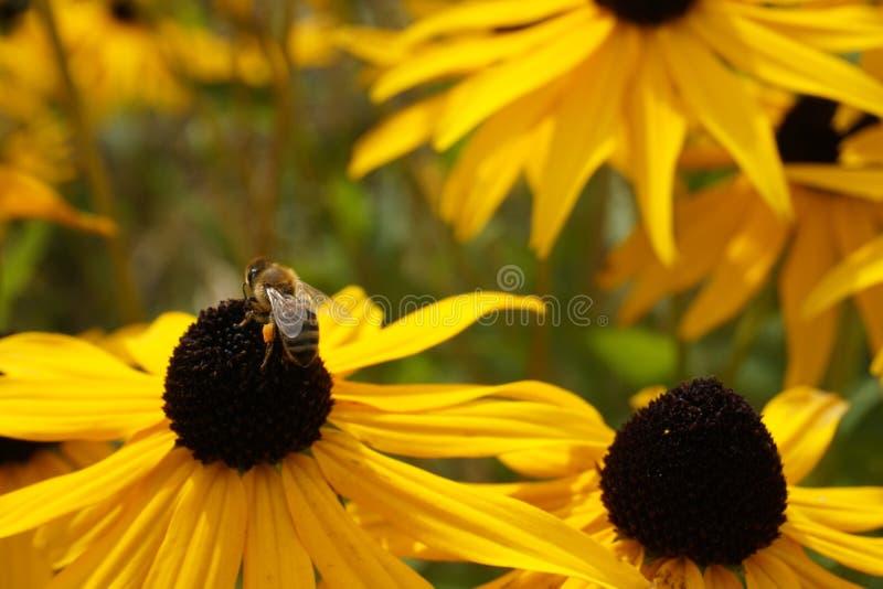 Natur Macroshot stockbilder