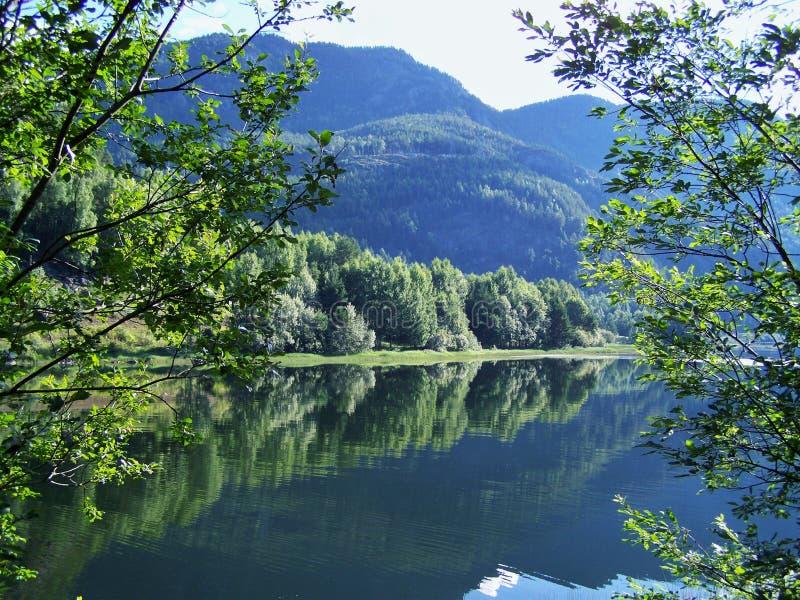 Natur-Norwegen-Sommer Wasser, Waldfjord an einem sonnigen Tag lizenzfreie stockfotografie
