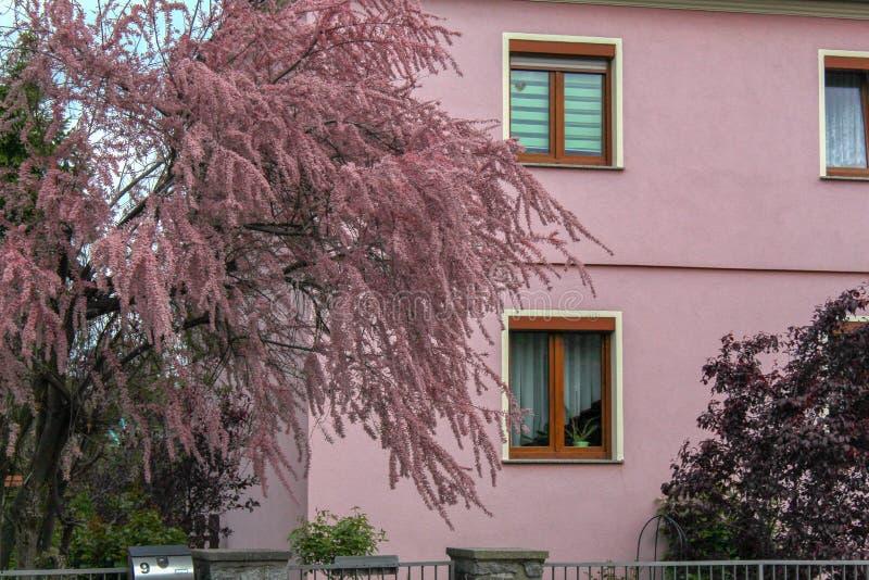 Natur och arkitektur i färgharmoni fotografering för bildbyråer