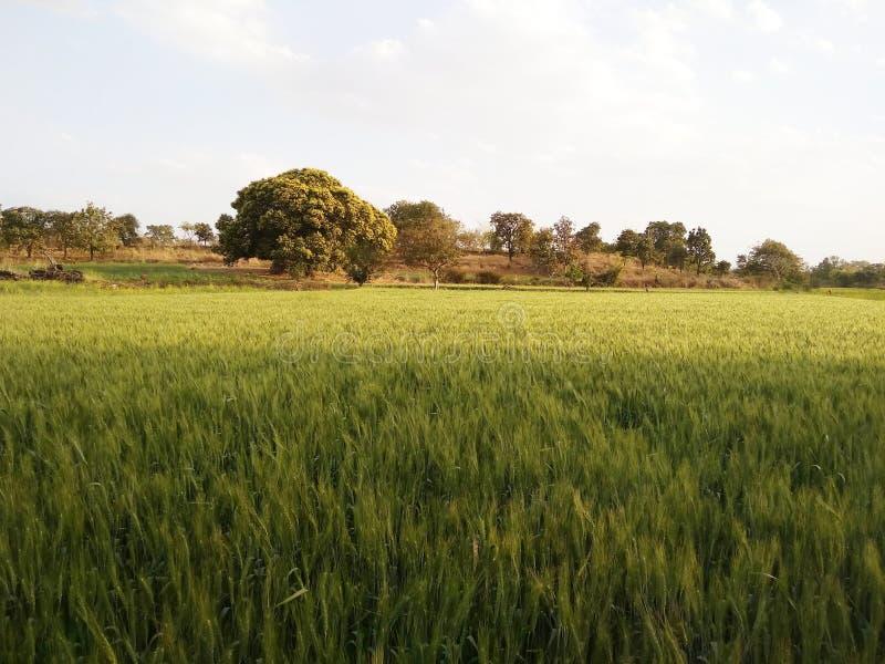 Natur och att bruka, åkerbruka härliga skördar, vatten, kanal, veteproduktion, härlig natur, kanal, royaltyfri bild