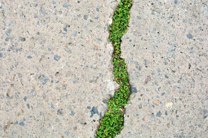 Natur- och civilisationväxelverkan Grönt gräs i spricka för asfaltväg arkivfoton