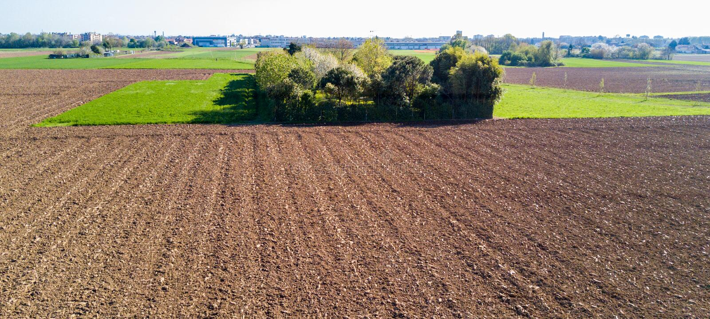 Natur och landskap: Flyg- sikt av ett fält och träd, royaltyfri fotografi