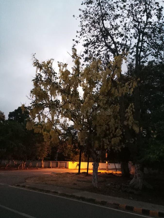 Natur på gryning arkivfoto
