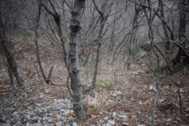 Natur-Park ` blaue Felsen ` - Bulgarien, Sliven lizenzfreie stockbilder