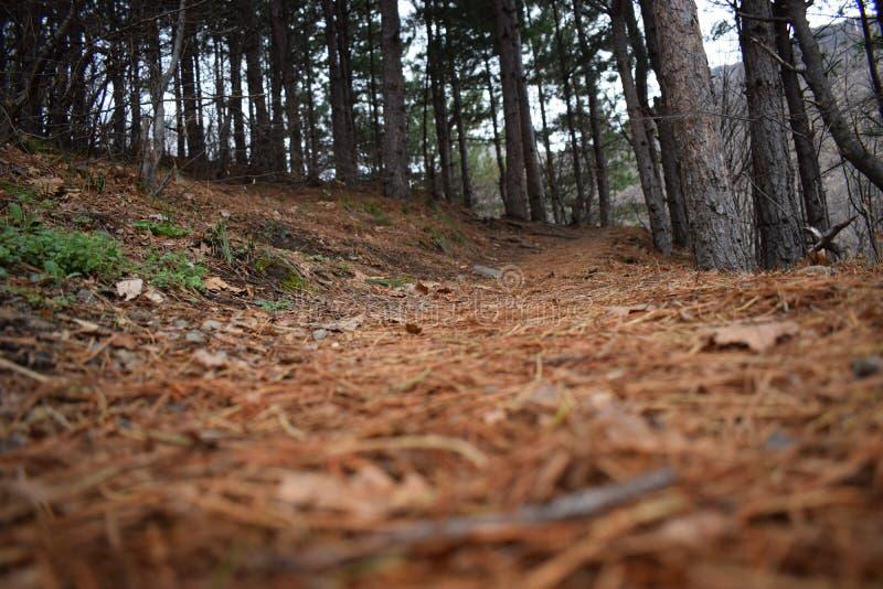 Natur-Park ` blaue Felsen ` - Bulgarien, Sliven lizenzfreies stockbild