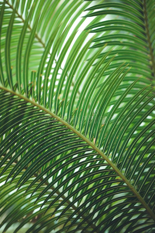 Natur-Plakat Blatt der Palme lizenzfreie stockfotografie