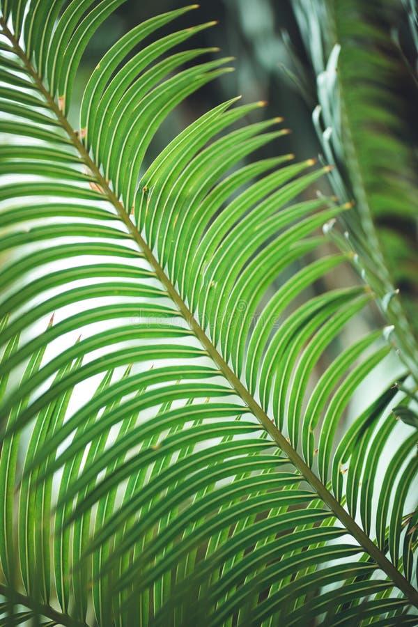 Natur-Plakat Blatt der Palme lizenzfreie stockbilder