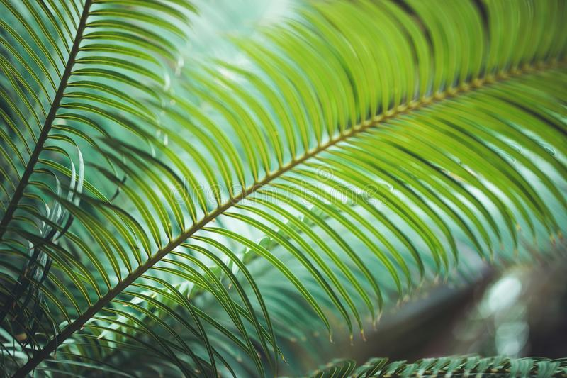 Natur-Plakat Blatt der Palme stockfotografie